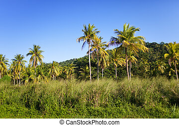 jamaica., tropische , natur