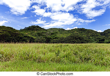 jamaica., tropische , nature., nassau, tal