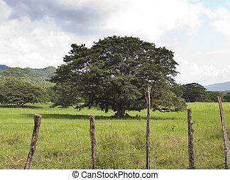 jamaica., tropische , nature., nassau, va