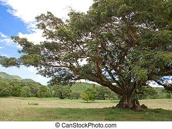 jamaica., tropische , nature.