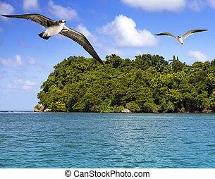 jamaika, möwen, aus, der, meer, in, a