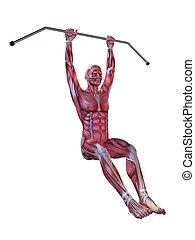 jambe, mâle, augmentations, -, séance entraînement, pendre