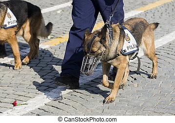 jambes, chien policier