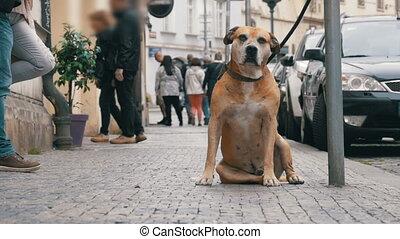 jambes, fidèle, foule, gens, chien, attente, passe, misérable, trottoir, indifférent, mensonge, owner.