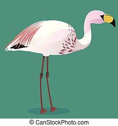 james, s, flamenco, caricatura, pájaro