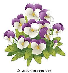jan, přeskočit, up, maceška, květiny