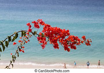 Jandia Beach in Fuerteventura, Spain - Jandia Beach and...