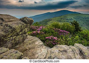 Jane, Rododendro, calvo,  keyhold, vista