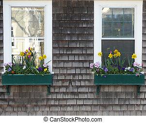 janelas, de, flores