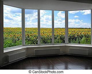 janelas, negligenciar, a, campo girassóis