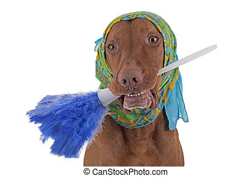 janitor dog - dog with scarf around head holding feather...
