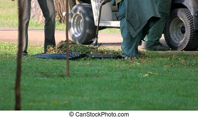 Janitor sweeps broom fallen leaves from grass. Use rake to...