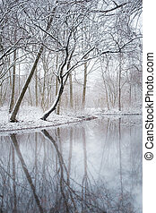 Winter lake in the park, trees covered with snow