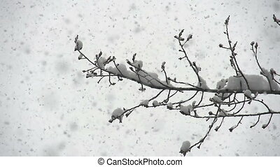 From the sky slowly falling snow flakes on a large background of trees. Slow Motion at a rate of 240 fps