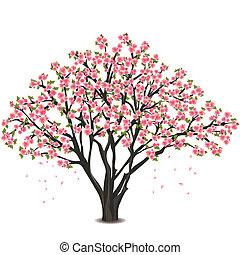japán, cseresznyefa, kivirul, felett, fehér