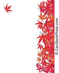 japán, piros, maple., eps, 8
