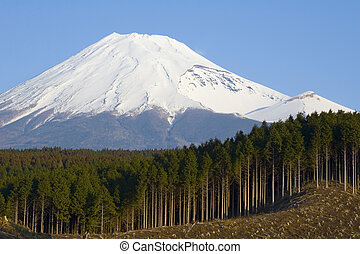 japão, acto derrubar árvores