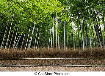 japão, floresta bambu