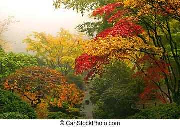jap ahorn, bomen, in, de, herfst