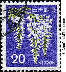 Wisteria sinensis - JAPAN - CIRCA 1969: A stamp printed in ...