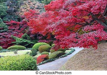 Japan momiji - Autumn leaves in Japan - red momiji leaves (...