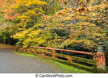 Japanese autumn color of maple tree with red bridge