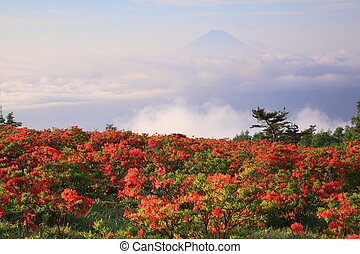 Japanese azalea with Mt. Fuji