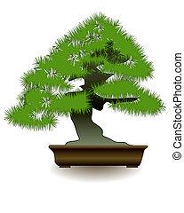 Japanese bonsai tree on white background