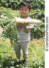 Japanese boy digging Japanese radish (first grade at elementary school)