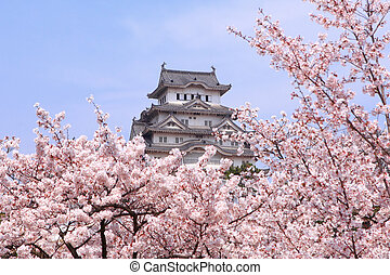 Japanese castle and Beautiful pink cherry blossom shot in ...