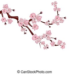 Japanese cherry tree. A branch of pink cherry blossom. Isolated on white background. illustration