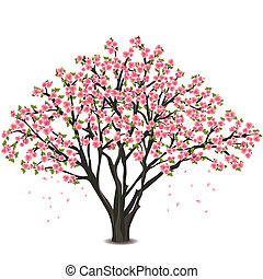 Japanese cherry tree blossom over white - Sakura blossom -...