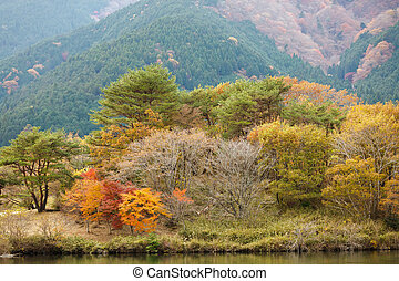 Japanese country autumn
