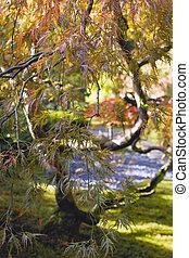Japanese Cut Laced Leaf Maple Tree Closeup