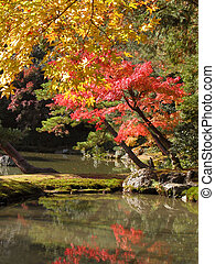 Japanese garden - Autumn aspect from Golden temple garden-...