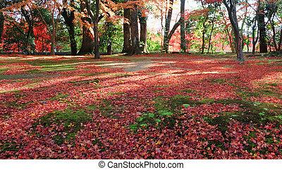 Japanese garden in Autumn color, Kyoto, Japan