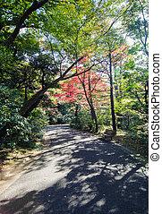 Japanese garden in autumn, Tokyo, Japan