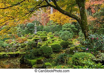 Japanese garden with autuman maple tree