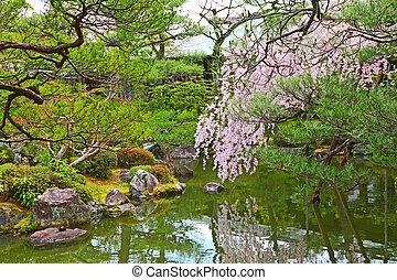 Japanese garden with sakura tree