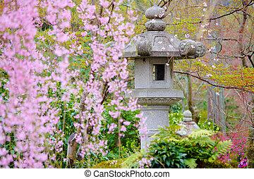 Japanese garden with stone lantern and weeping sakura