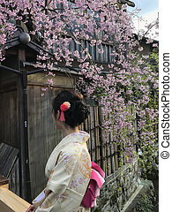 Japanese girl under the sakura in Gion district Kyoto, Japan...