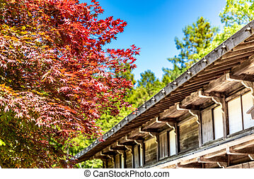 Japanese house with red maple