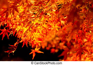 japanese juharfa, alatt, ősz