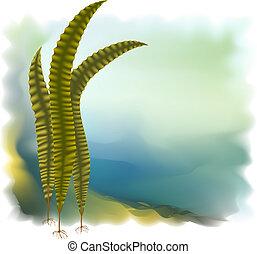 Japanese kelp (Laminaria). Vector illustration on white background.
