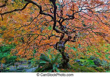 japanese kert, befűz, levél növényen, juharfa fa, alatt, bukás