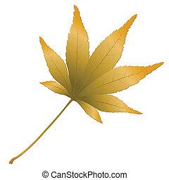 Japanese Maple leave