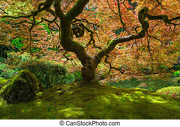 Japanese Maple Tree Bathed in Sunlight