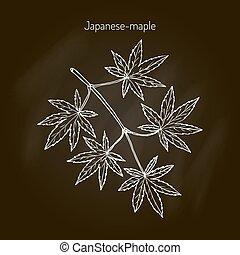 Japanese-maple tree branch