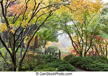 Japanese Maple Tree Canopy by the Bridge
