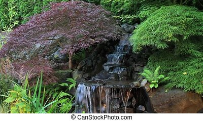 Japanese Maple Trees by Waterfall